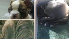 These Are The Photos Petland Doesn't Want You To See For the love of animals. Pass it on.
