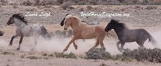 At Wild Horse Education we celebrate the spirit of giving. 365 days a year we advocate for our wild horses and burros. From field monitoring of herds and range health, rescue, litigation, research ...
