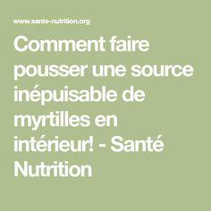 Comment faire pousser une source inépuisable de myrtilles en intérieur! - Santé Nutrition