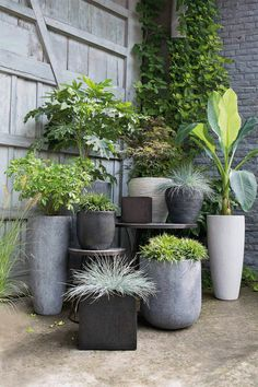 Pot display Plants, Garden, Gardens, Plant, Gardening, Home Landscaping, Planets