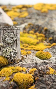 yellow and grey lichen and moss Terrarium, Flora, Slime Mould, Moss Garden, Mushroom Fungi, Paludarium, Shades Of Yellow, Mellow Yellow, Natural World