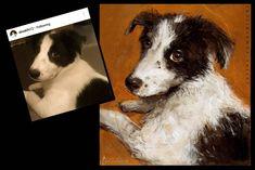 #instadogs#dogart#puppyeyes #mansbestfriend #dogsoninsta #petartist#doglover#bordercollie #bordercolliepuppy…