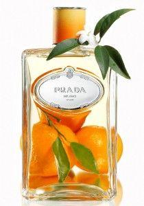 fragrance Prada perfume bottle oranges orange blossom still life photograph Pr Perfume Parfum, Perfume Hermes, Perfume Scents, Parfum Spray, Perfume Bottles, Fragrance, Obsession Perfume, Citrus Perfume, Essential Oils
