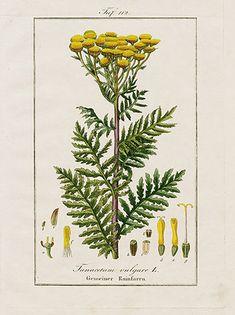 Eduard Winker Abbildungen Sämmtlicher Arzneigewachse 1832