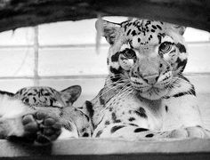 Just gimme all the big cats