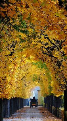 Lovely Autumn in Vienna, Austria