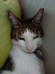 Senza il mio gatto Pika non posso vivere