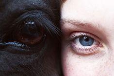 human eye and animal eye