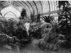 This would be a room in my huge historical estate I would own..photo taken in greenhouse at Shaw's Garden Aug. 1915