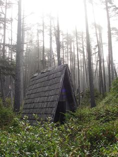 Tiny A-frame house in the woods / The Green Life <3