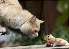 Kitteh, leave my berr-eh alone!