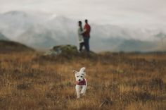 Dawn + Connor's Scottish Highland Engagement : Joanna + Dylan of Kitchener Photography