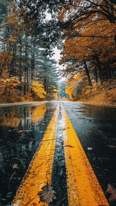 Autumn-Road-Rainfall-Trees-iPhone-Wallpaper - iPhone Wallpapers