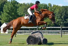 Equestrian Photography Blog