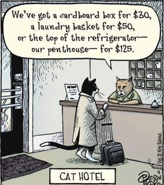 A funny picture: the Cat Hotel