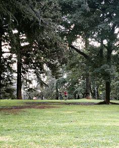 Descalzos en el parque #parque #park #outdoors #grass #urban #urbanjungle #nature #couple #moments #instapic #nofilter #trees #arbres #leaves #feuilles #green #atardecer #bluehour #evenning #relax...