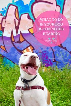 Here's What to Do If Your Dog is Losing His Hearing