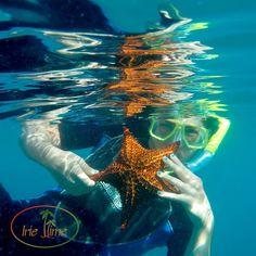 Snorkel/Dive with Shoal Bay Scuba!#Anguilla #AnguillaWeek #NeedSomeAnguilla #Caribbean