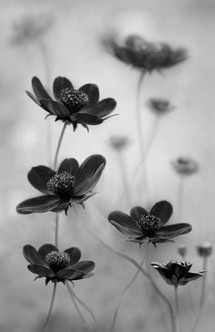 2011 International Garden Photographer of the year - in pictures