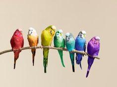 Parakeets.