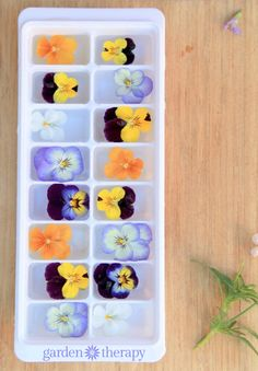 How to make the perfect floral ice cubes