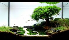 A tree  on a hill by a path in an aquarium. Does anyone have a camera?