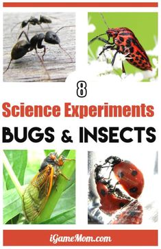 Bugs and insects science activities for kids preschool to grade 6 learn insect facts life cycles via hands on activities: ants butterfly ladybug. Outdoor STEM experiments in the backyard and fun science fair project ideas Kindergarten Science Projects, Cool Science Fair Projects, Insect Activities, Science Activities For Kids, Preschool Science, Science Education, Kindergarten Stem, Citizen Science, Outdoor Education