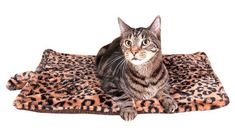 Thermal Cat Pet Dog Warming Bed Mat - BEIGE, L x W Measures: l x w Self warming pet mat, no electricity - cozy and soft Care instructions: machine wash in cold water on gentle cycle. Line dry Beige leopard-print motif Brand: downtown pet supply Heated Dog Bed, Pet Dogs, Dog Cat, Cat Mat, Bed Mats, Kittens, Cats, Cat Health, New Puppy