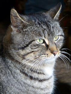 Katze cat