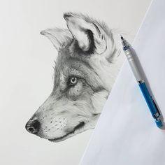 Grey wolf pencil drawing in progress by artist Kerry Jane #wolf #art