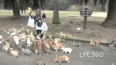Rabbit Stampede (Original) - Woman Chased By Hundreds of Rabbits - Cuteness