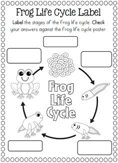 Life Cycle of a frog coloring page  |   Crafts and Worksheets for Preschool,Toddler and Kindergarten