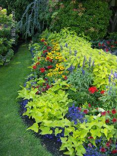 My Garden in Summer- Front Yard