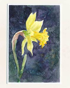 watercolor, daffodil Ručne maľovaná pohľadnica - Narcis na tmavo modrom pozadí