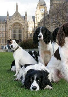 Dogs of the Manor