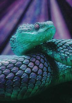 African bush #viper. #snake #reptile Get Informed with Worthy Readings. http://www.dailynewsmag.com