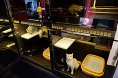 The Purrfection Suites, a luxury cat hotel in Singapore.