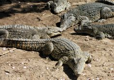 Cuba: The Accidental Eden | Photos: Cuba's Natural Diversity | Nature | PBS