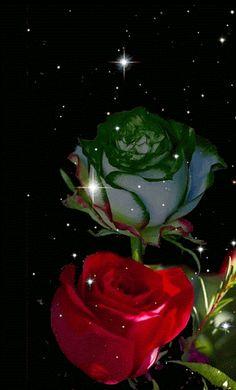 GIFS HERMOSOS: flores encontradas en la web Beautiful Flowers Photos, Beautiful Flowers Wallpapers, Beautiful Rose Flowers, Beautiful Gif, Love Rose, Flower Photos, Flower Phone Wallpaper, Flower Wallpaper, Flowers Gif