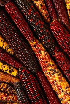 tabzyf:  Colorful corn. I found this photograph in the iPhone Retina Wallpapers HD app. I find it fascinating!