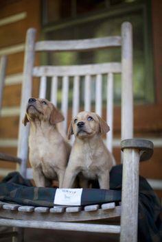 Puppies~