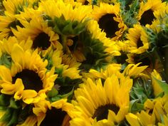 Sunflowers  Available at Greenleaf Wholesale Florist  www.greenleafwholesale.com