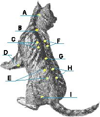 Acupressure Points for Pets