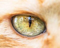 Mesmerizing Macro Photos of Cats' Eyes by Andrew Marttila - Mesmerizing Macro Photos of Cats' Eyes by Andrew Marttila Fotografia Macro, Eye Photography, Animal Photography, Fotos Em Close Up, Regard Animal, Eye Pictures, Photos Of Eyes, Warrior Cats, Large Animals