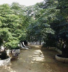 El jardín Sidewalk, Plants, Apartments, Side Walkway, Walkway, Plant, Walkways, Planets, Pavement