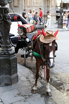 Even the horses wear bright hats!  #Palermo