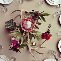 Fun mix of antlers, protea, and bright colors