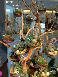 Suspended air plants and mossy lil terrariums over a driftwood decor piece! What an attention grabber!