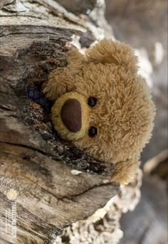 Teddy Pictures, Charlie Bears, Teddy Bears, Friends, Photos, Animals, Plushies, Women, Bear Cubs