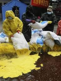 Chemical contamination   Contamination caused by chemicals